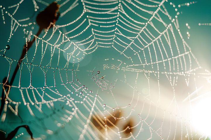 夏威夷乌鸦